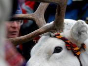 Reindeer Frederik Broman